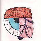 Brain_Eye_Heart by SteveHanna