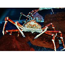 One Mean Crab! Photographic Print