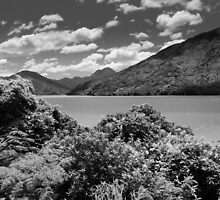 B&W Pelorus Sounds by srhayward