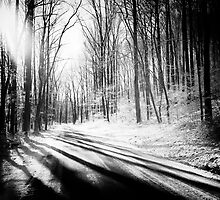Snow and Tree Shadows by KellyHeaton