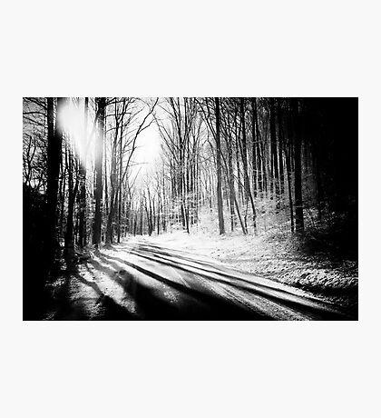 Snow and Tree Shadows Photographic Print