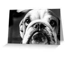 Maz in BW Greeting Card