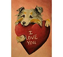 Australian Shepherd~I love You~Valentine Photographic Print