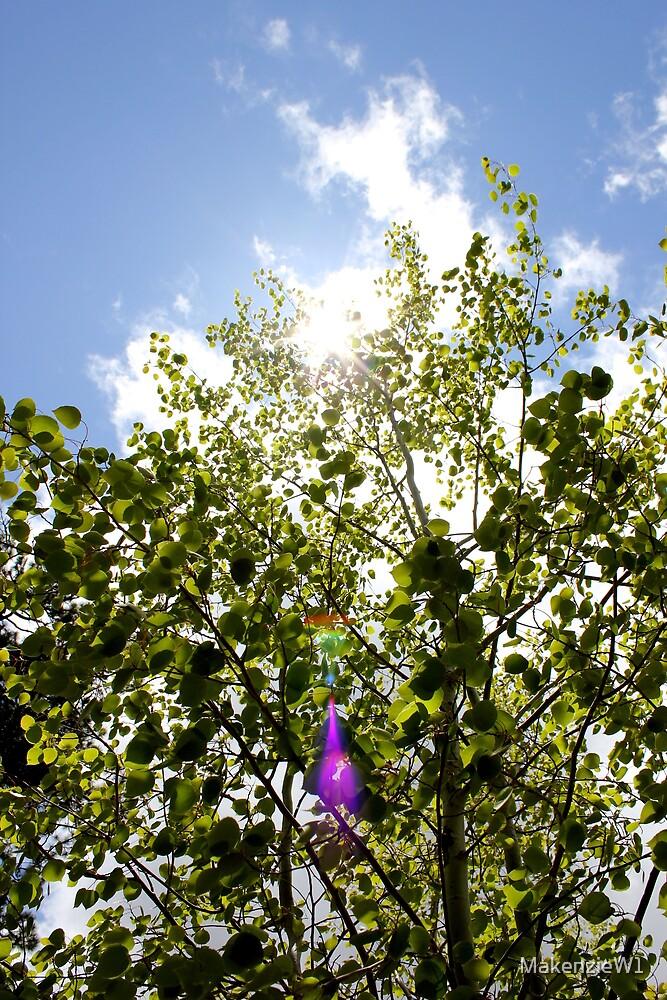 Sunlight in the Aspens by MakenzieW1