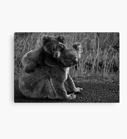 Koala with Joey.  Canvas Print