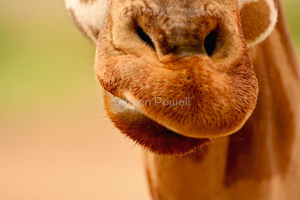 Mouth to Mouth by Steven Powell