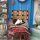 Marrakesh Cat by Louise Fahy