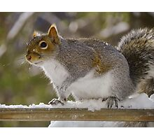 Snow Squirrel Photographic Print