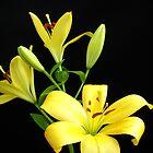 Yellow Lilies by Vitta