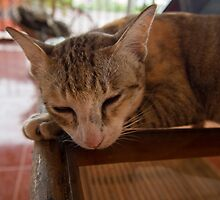 sleeping cat by Jon  Solis