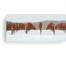Niagara Vineyard Canvas Print