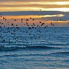 Starlings at Sunset by howardcar