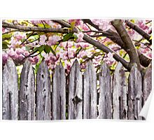 Fence and Flowers Poster