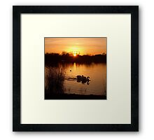 Swan Couple at Sunset Framed Print
