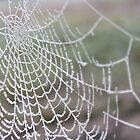 Frosty Web  by Miss Dunk