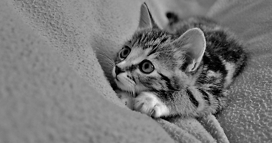 Little MillieMac..... Hunter by Ladymoose
