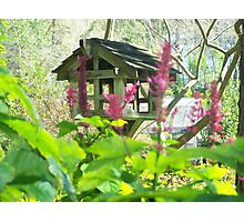 Bird house  Photographic Print