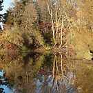 Fall Color Reflected at Wilson Grove Pond by Deb Fedeler
