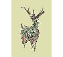 Beautiful Deer Old Photographic Print