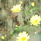My Yellow Daisies by Leann  Rardin