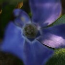 Flower Close up by Pawel J