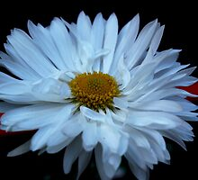 Flower Close up by PMJCards