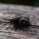 Fly by Pawel J