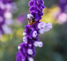 A Sage Bee by heatherfriedman