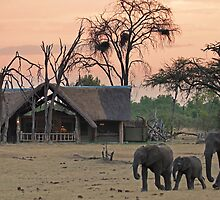 Family stroll by Explorations Africa Dan MacKenzie