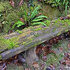 Damp Bench by magicaltrails