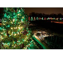 Ring of Christmas Trees Photographic Print