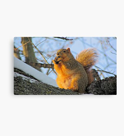 We Take the Nut Very Seriously Canvas Print