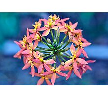 Floral Crown Photographic Print