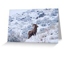 Winter Ram Greeting Card