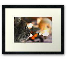 Samhain cat Framed Print