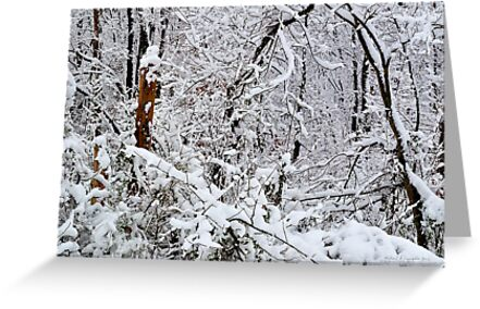 Southern Illinois Winter Scene 1_ Dec 2012 by michaelasamples