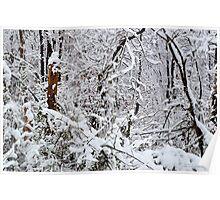 Southern Illinois Winter Scene 1_ Dec 2012 Poster
