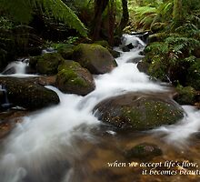 The Flow of Life by happyactivist