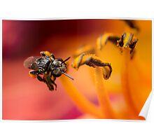 Native Stingless Bee Poster