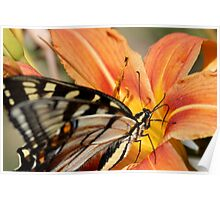 Monarch and Tiger Lilly Poster