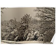 Southern Illinois Winter Scene 4_ Dec 2012 Poster