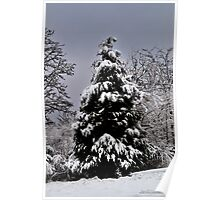 Southern Illinois Winter Scene 5_ Dec 2012 Poster