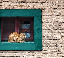 Cat in the Window by photograham