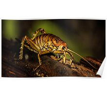 Native New Zealand Weta Poster