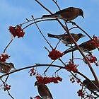 December Robins by Dallas Kempfle