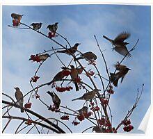 Robins Everywhere Poster