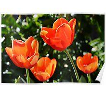 Spring Colour Poster