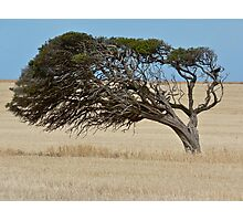 Blowing in the Wind - Yorke Peninsula, South Australia Photographic Print