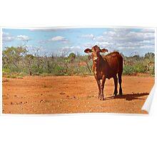 Cattle Station - Lyndon Station, Western Australia. Poster