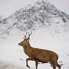 Stag on Snow by DerekWells